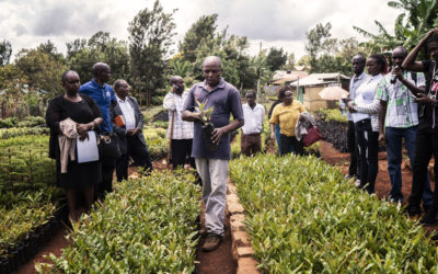 Diaspora makes a difference in COVID-19 rural recovery
